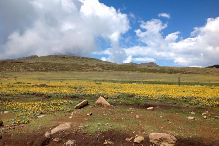Highland Vegetation of Lesotho